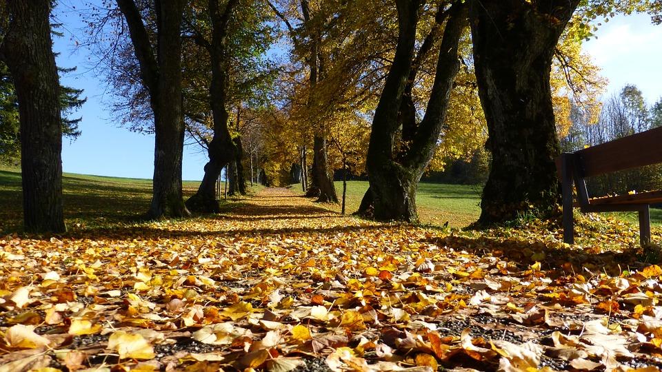 field trip, fall, autumn